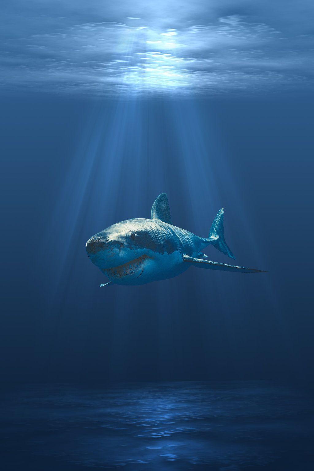 vans requins