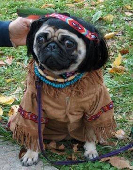 Pocahontas Pug Pugs Funny Cute Pugs Pugs In Costume
