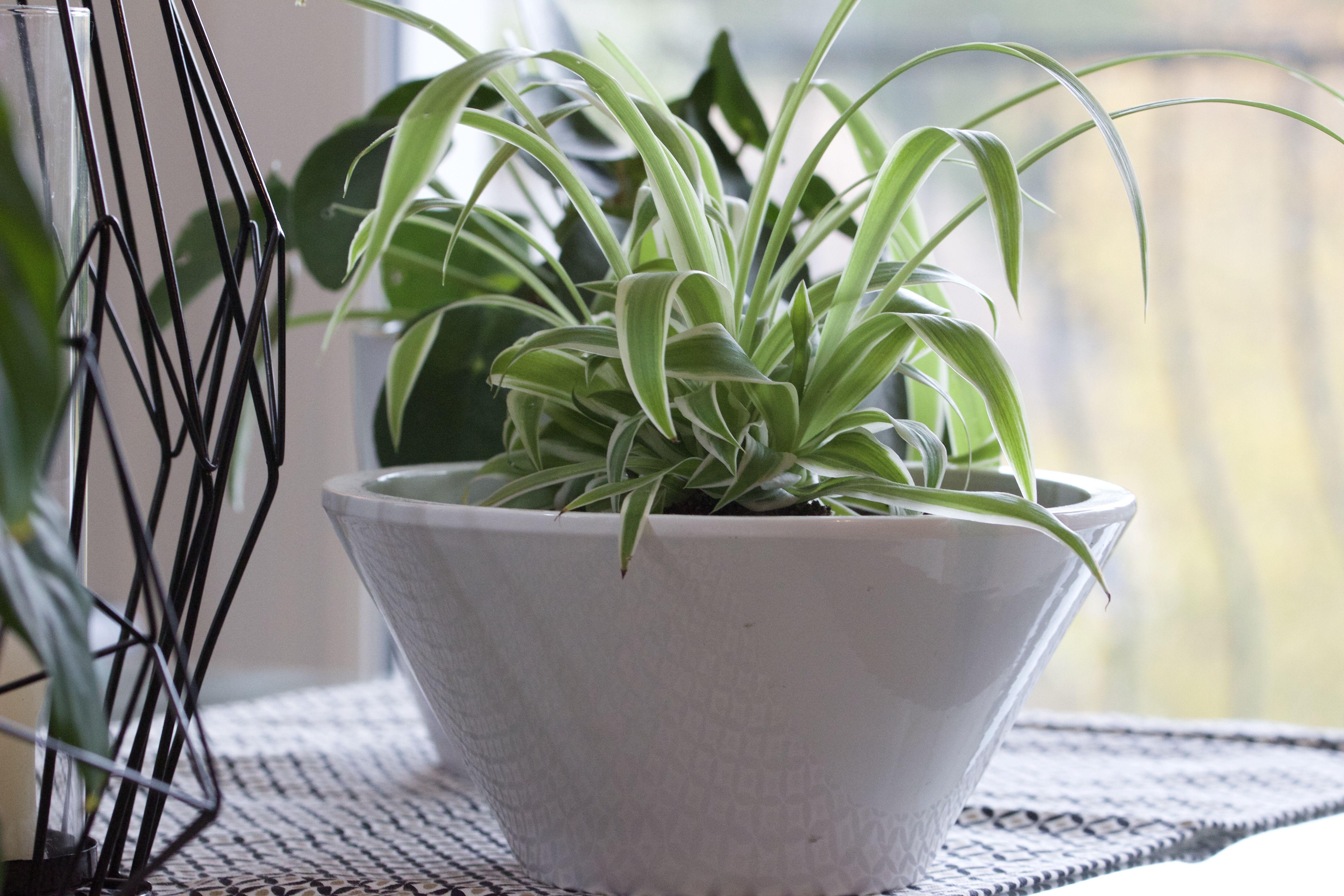 Les Plantes Depolluantes Ma Petite Selection Personnelle