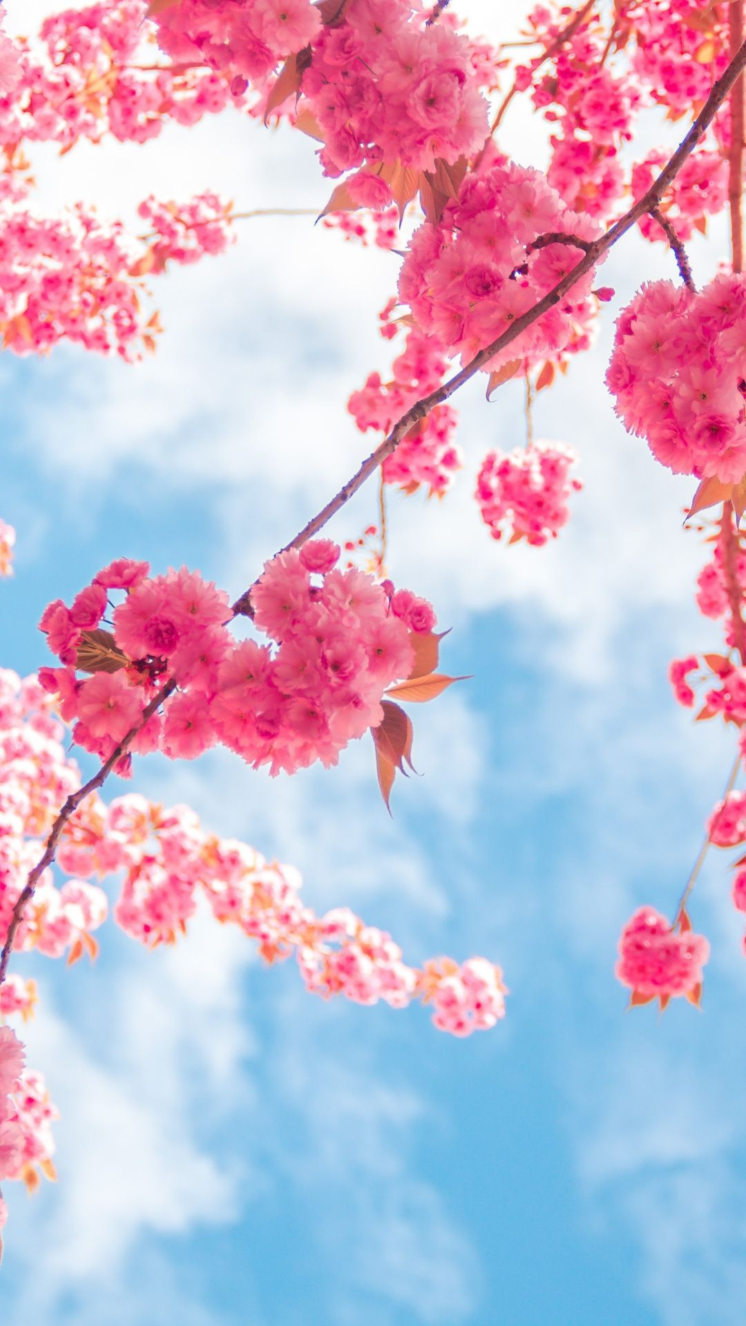 Free Spring Flower Phone Wallpapers Backgrounds – Rebeah Bailey
