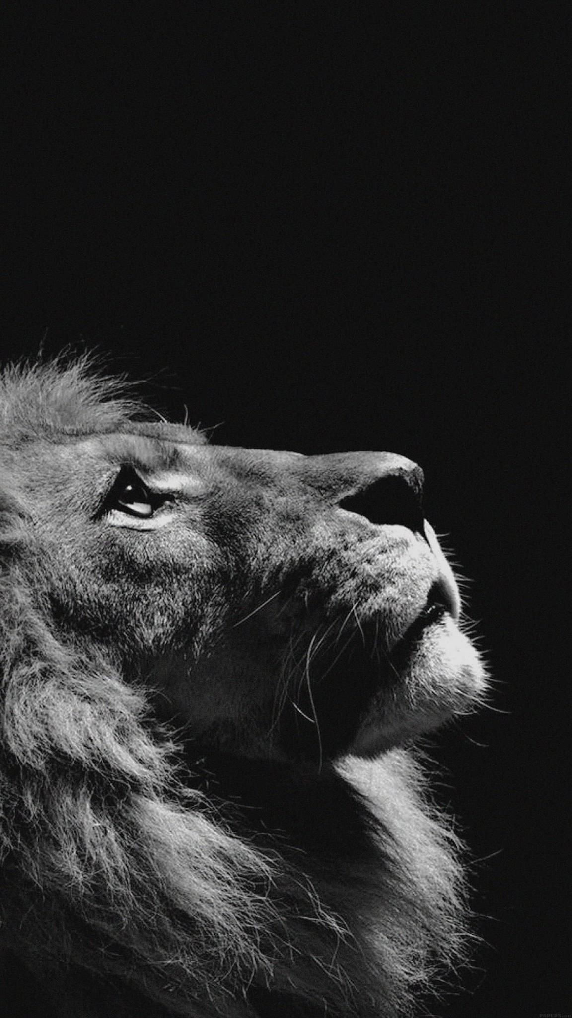 Wallpaper For Iphone X Animal Iphone Wallpaper Hd Image For Best Hd Wallpaper For Apple Iphone 7 Plus Lion Looking Sky Sfondi Sfondo Con Animali Sfondo Iphone