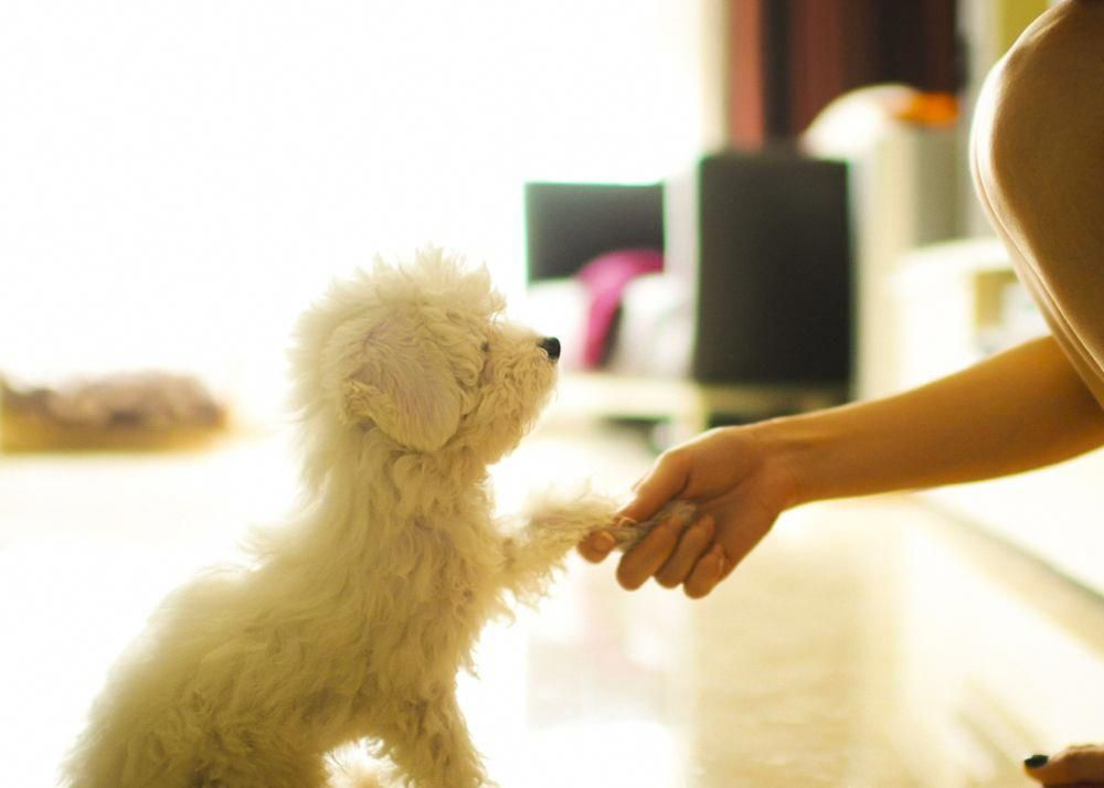 Tips for Apartment Training a Puppy | Puppy training ...