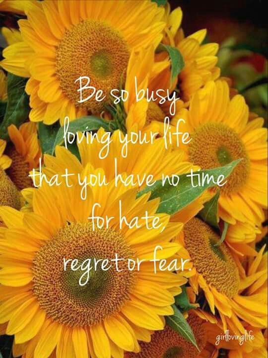 Sunflower Love Quotes : sunflower, quotes, Comes, First., Sunflowers, Love., Flower, Quotes,, Sunflower, Pictures