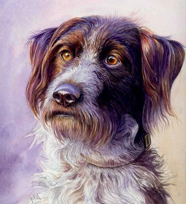 Drahthaar Dog Portrait Watercolor Art Tutorial Using Four Colours