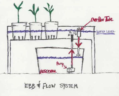 Ebb And Flow System Diagram Aquaponics System Hydroponics System Aquaponics