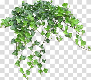 Green Leafed Plant Computer Graphics Chart Bushes Transparent Background Png Clipart Plants Pink Flowering Trees Planting Flowers