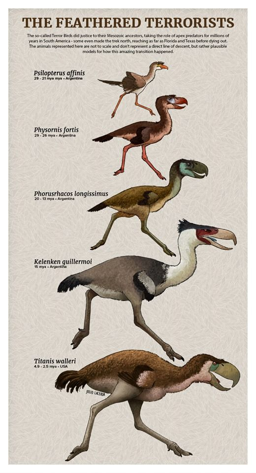 Terror Birds Evolution #prehistoricanimals