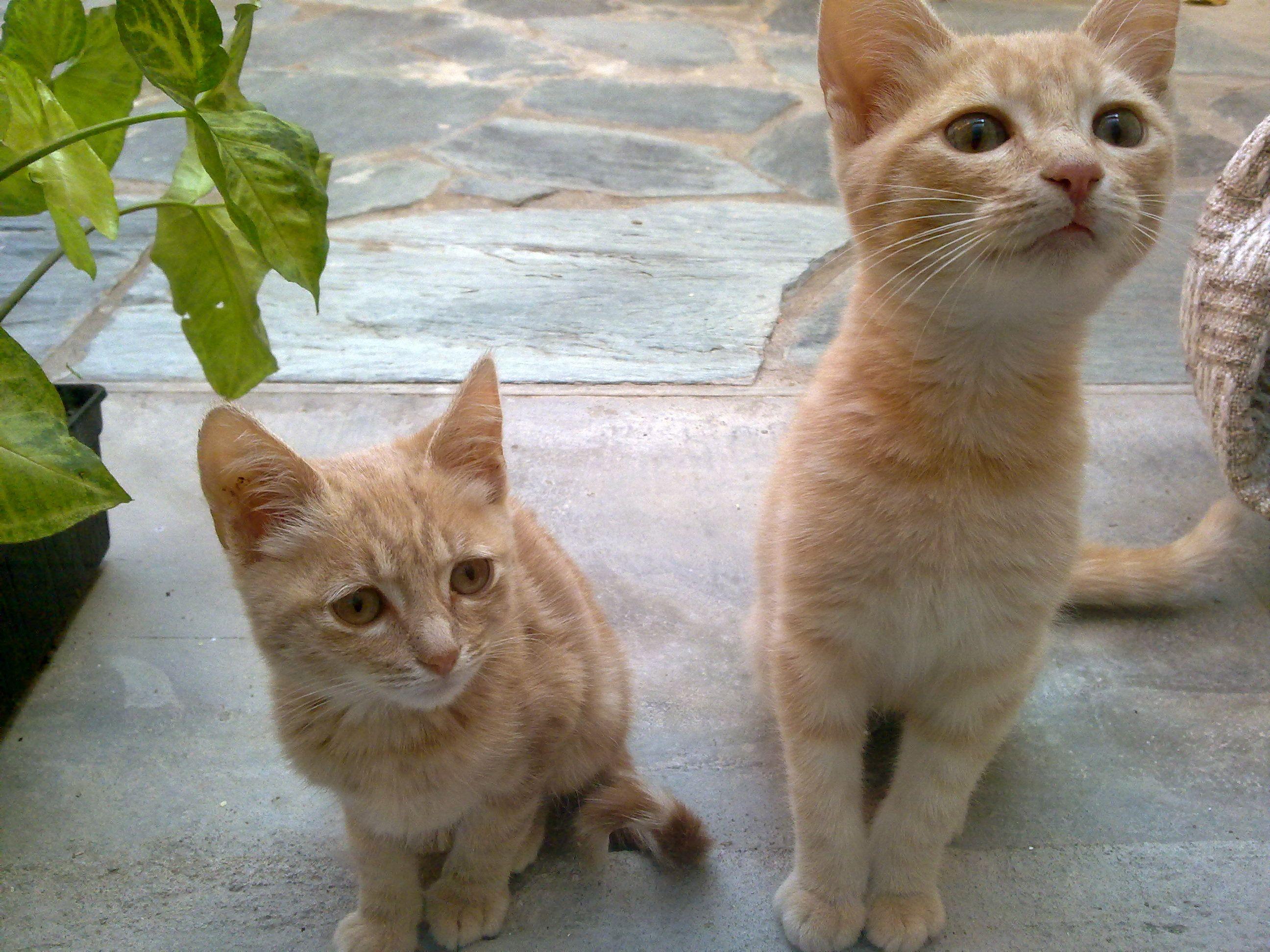 Pin by Camilla Bowes on Cat Behavior Cat behavior, Kitty