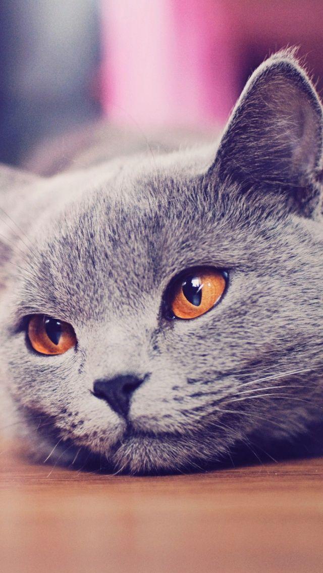 котята фото для айфона арбуз