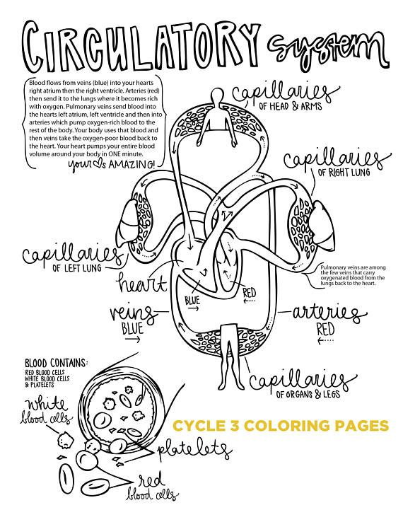 4th EDITION Cycle 3 SCIENCE coloring pages (With images