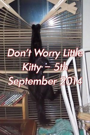 Lauren James Tells About Don't Worry Little Kitty – 5th September 2014   #cats  #catlover  #cute  #adoptdontshop  #lovecats  #fluffykittens  #Cat  #Tabby