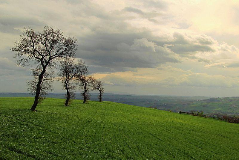 alberi in fila