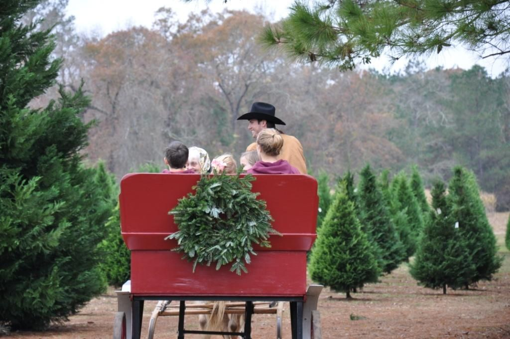 Grant Christmas Tree Farm and Syrup Mill (Grant, La) @Jim-Erica ...