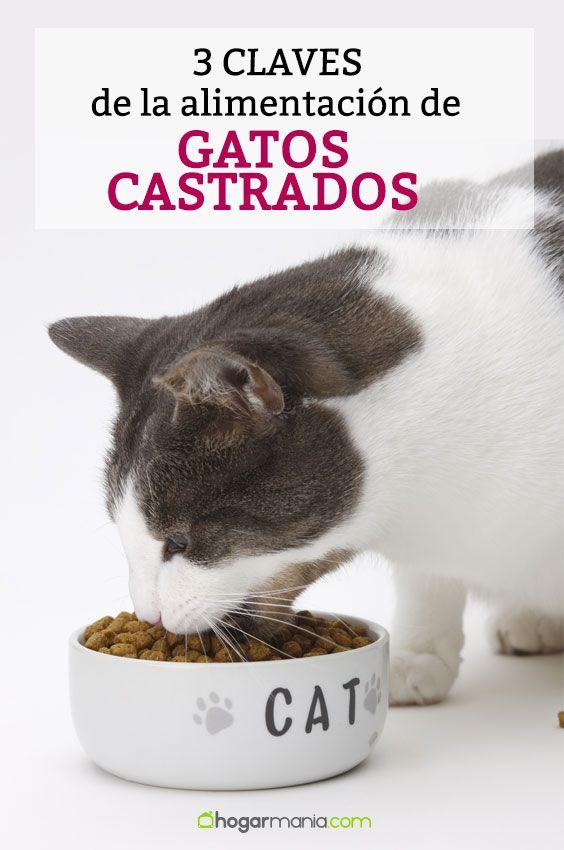 3 Claves Para Cuidar La Alimentación En Gatos Castrados Decogarden Gatos Alimentación De Gatos Castrados
