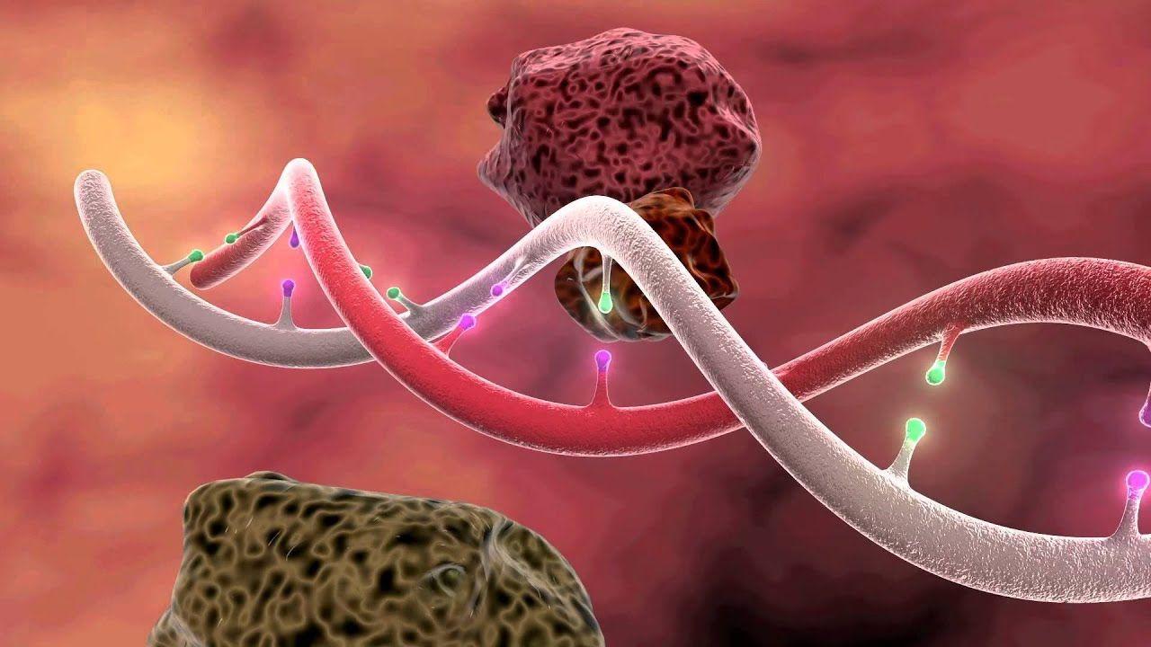 DNA Mutation 3D Animation Dna replication, Dna, Dna