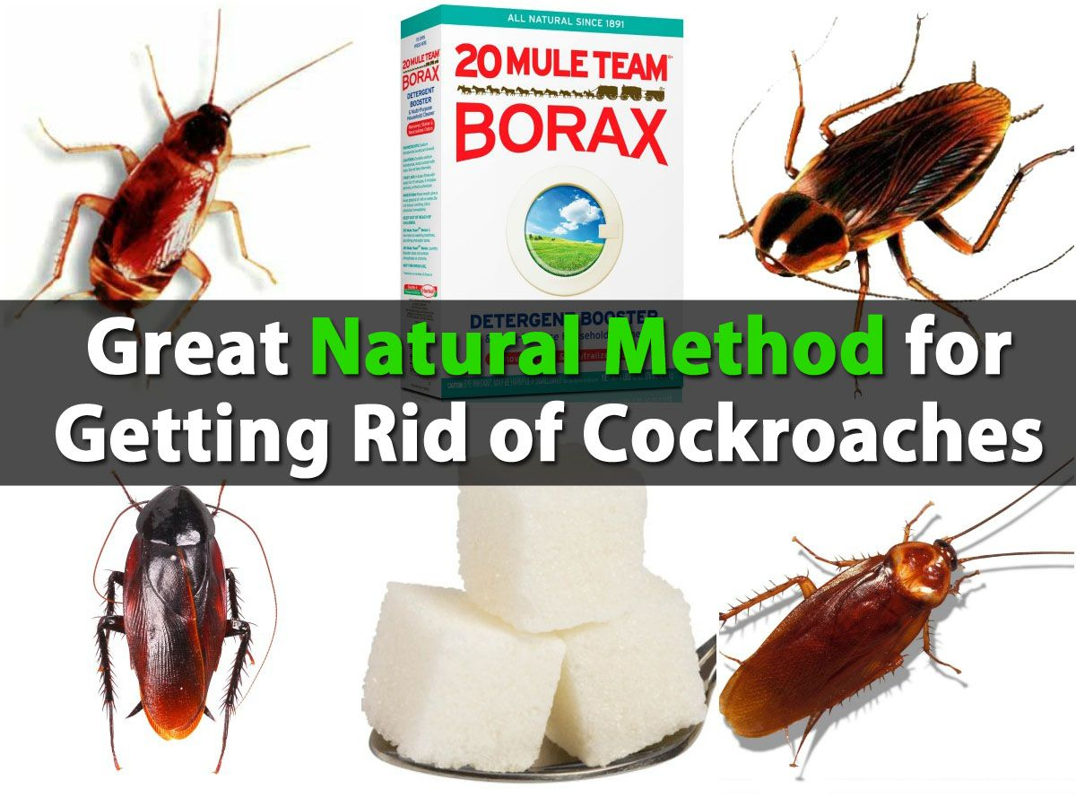 Great Natural Method For Getting Rid Of Cockroaches With Images Borax Uses Rid Of Ants Get Rid Of Ants