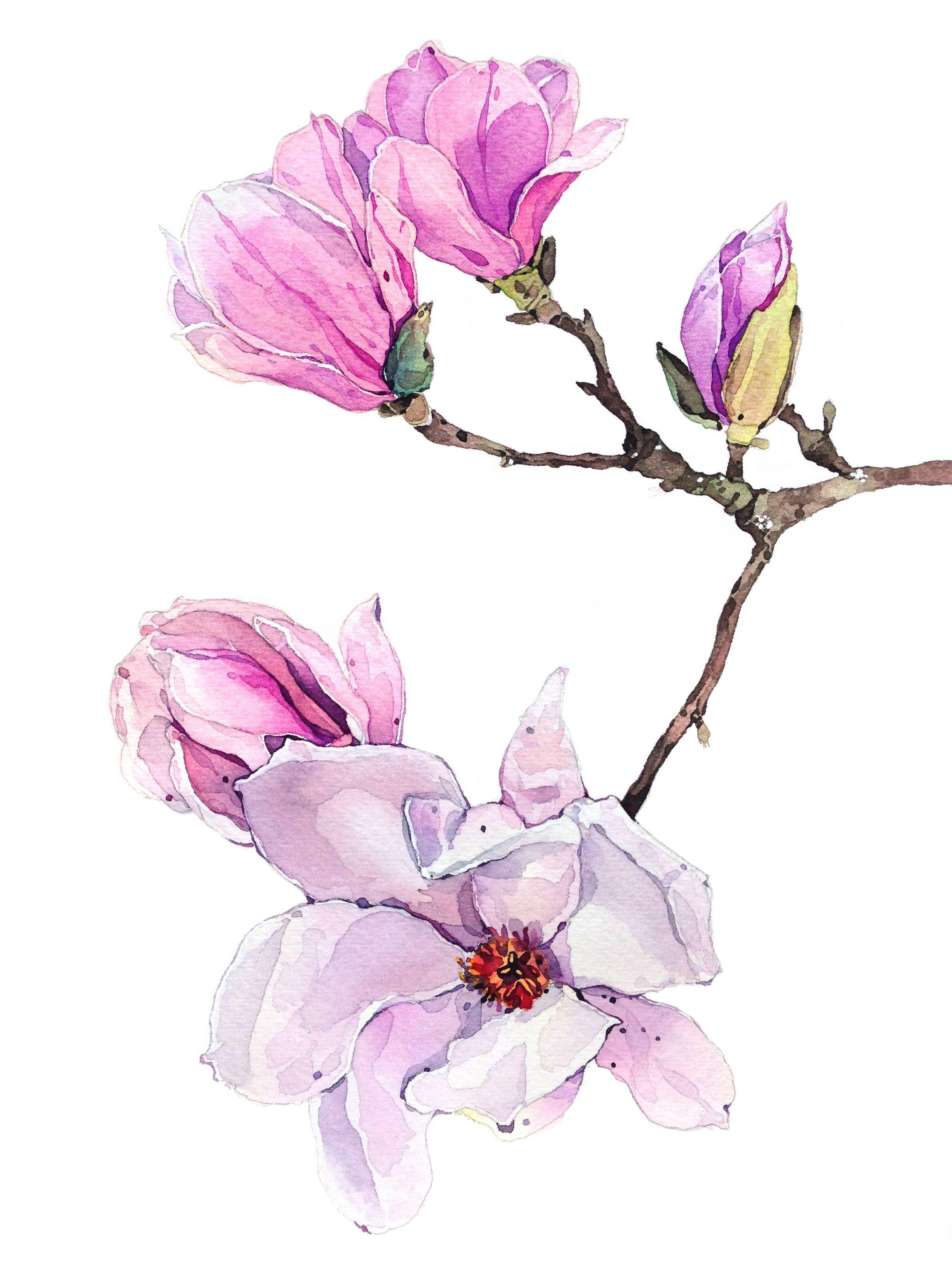 Magnolia drawing watercolor aquarelle for Pinterest aquarell