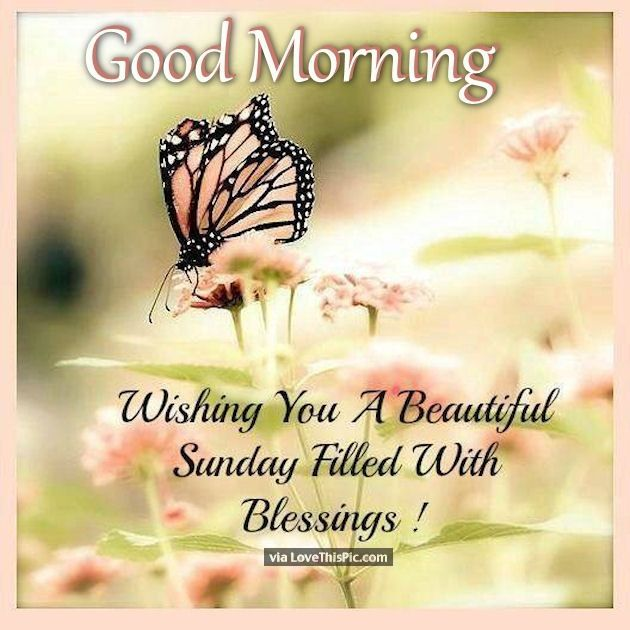 Elegant Good Morning Sunday Wishes