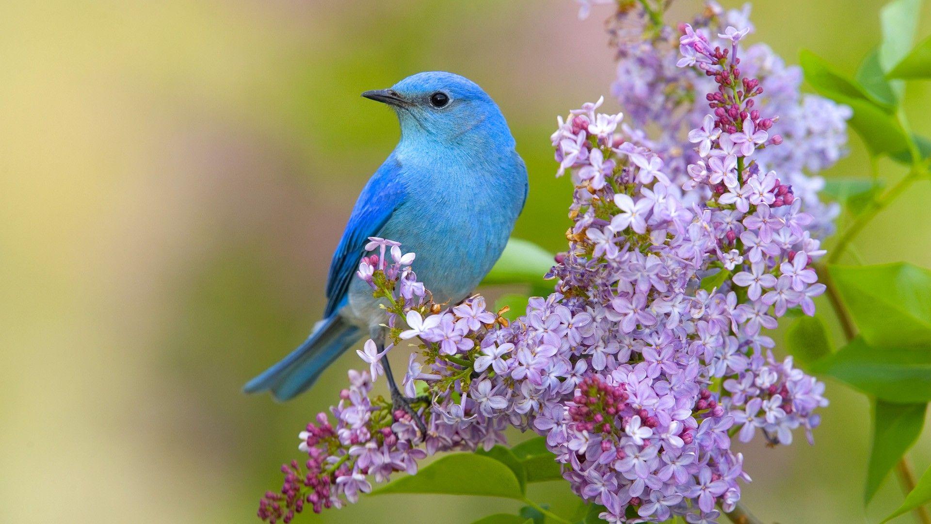 Birds Backgrounds Free Download Beautiful Birds Blue Bird Birds