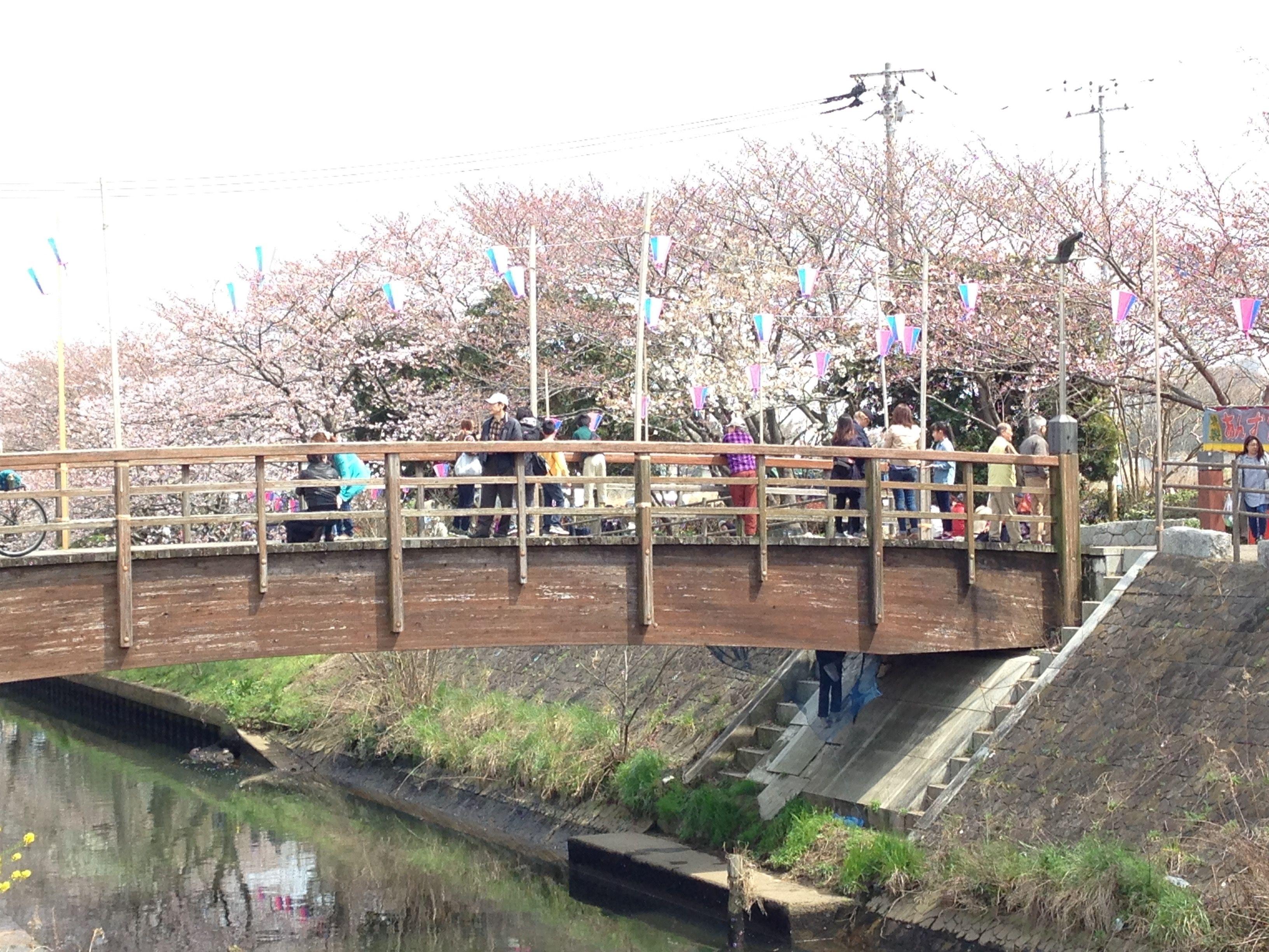 Wooden bridge, Ebigawa river