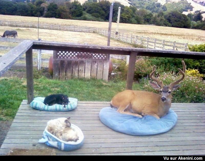 Un chien... un chat et un cerf A dog.....a cat and a deer