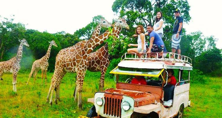 Calauit Wildlife Day Safari Private Tour Departing In 4 4