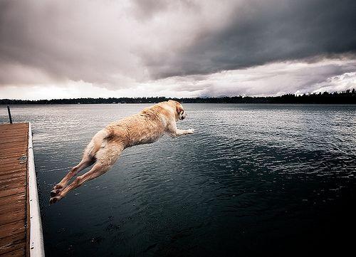 diver pup