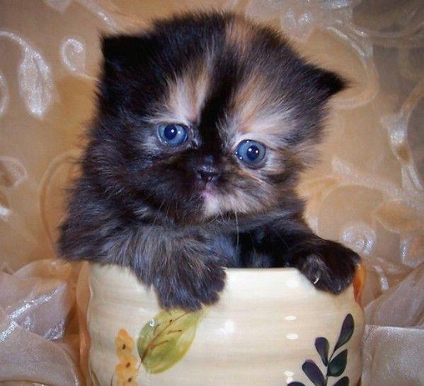 Pet in tea cups | Cute Animals in Tea & Coffee Mugs Photos