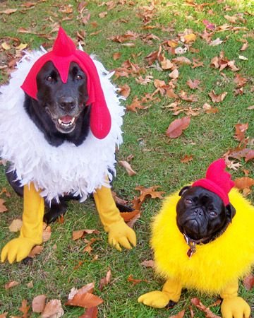 Dogs Chickens Pet Halloween Costumes Dog Halloween Costumes
