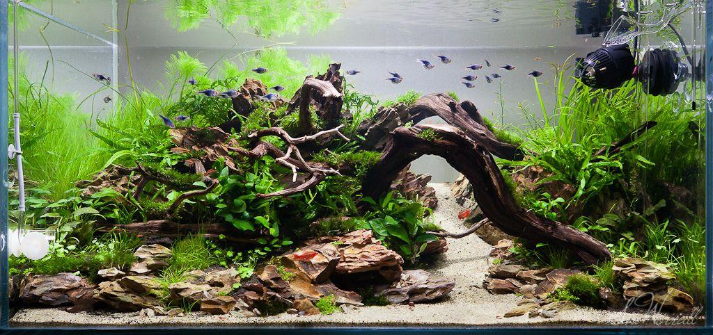 90x45x45cm Planted Dragon Stone Aquascape Nature Aquarium Aquarium Design Aquarium Landscape