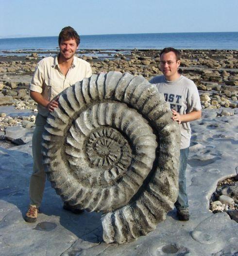 Giant AmmoniteFossil