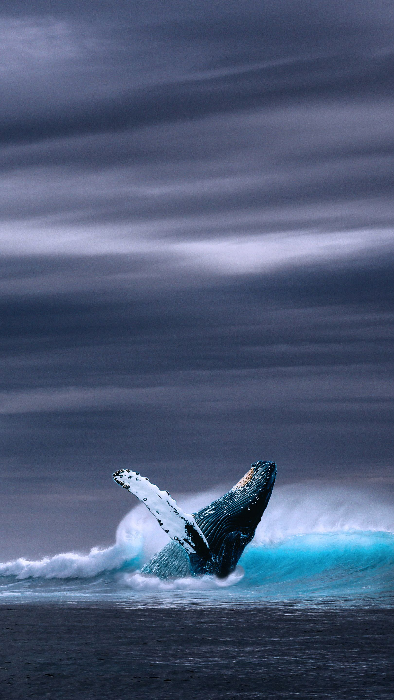 Blue Whale Mobile Hd Wallpaper In 2020 Whale Pictures Beautiful Sea Creatures Ocean Animals