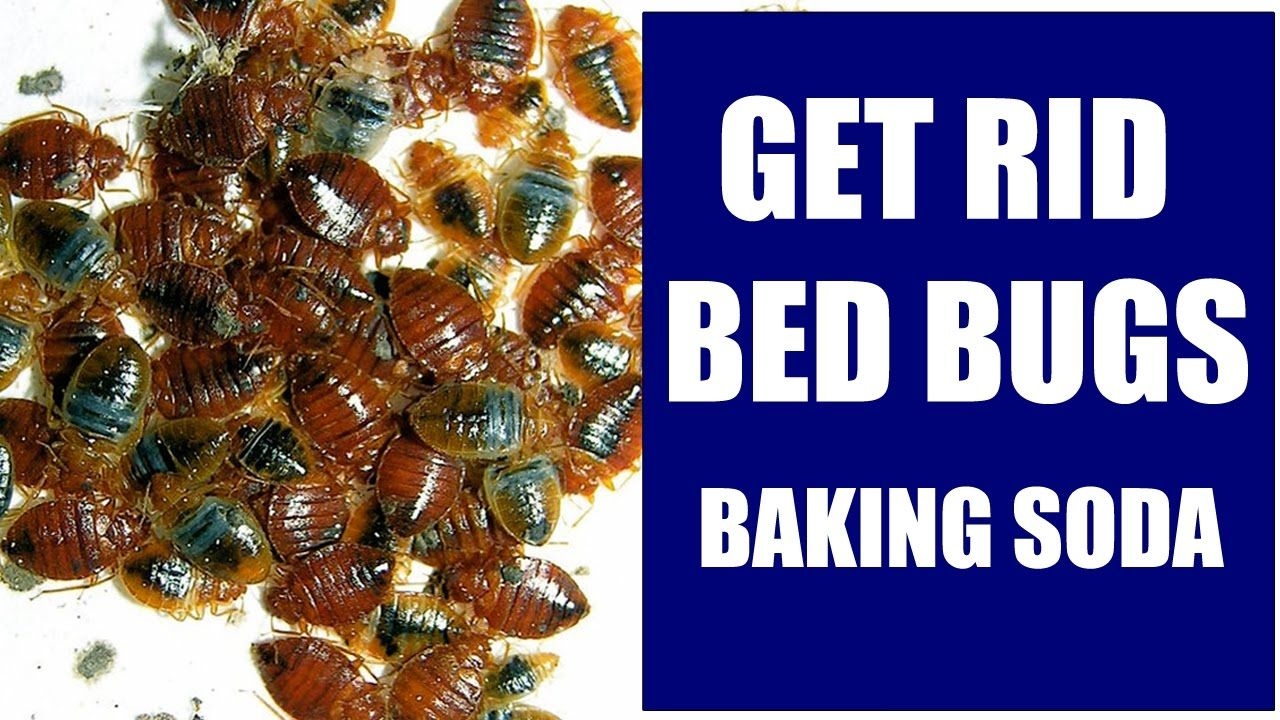 How To Get Rid of Bed Bugs With Baking Soda Completely and