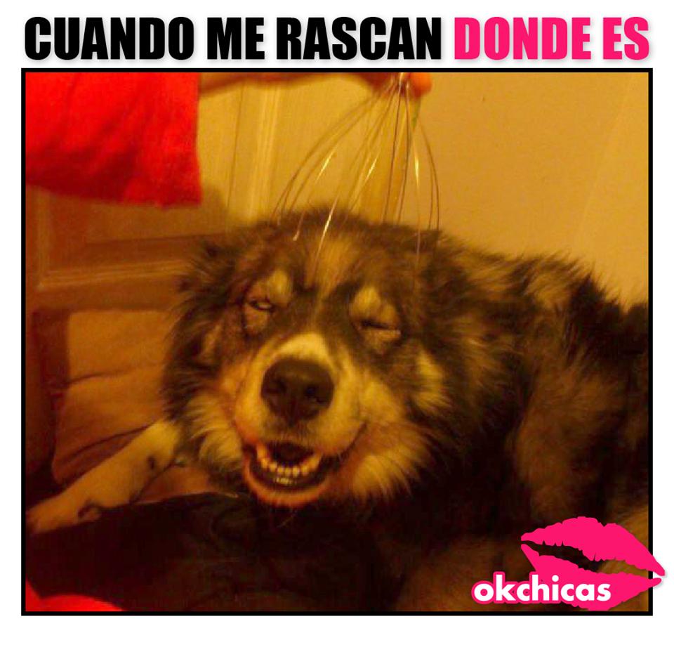 20 Divertidos Memes De Perros Que Te Haran Llorar De Risa Memes Perros Imagenes Divertidas De Animales Humor Divertido Sobre Animales