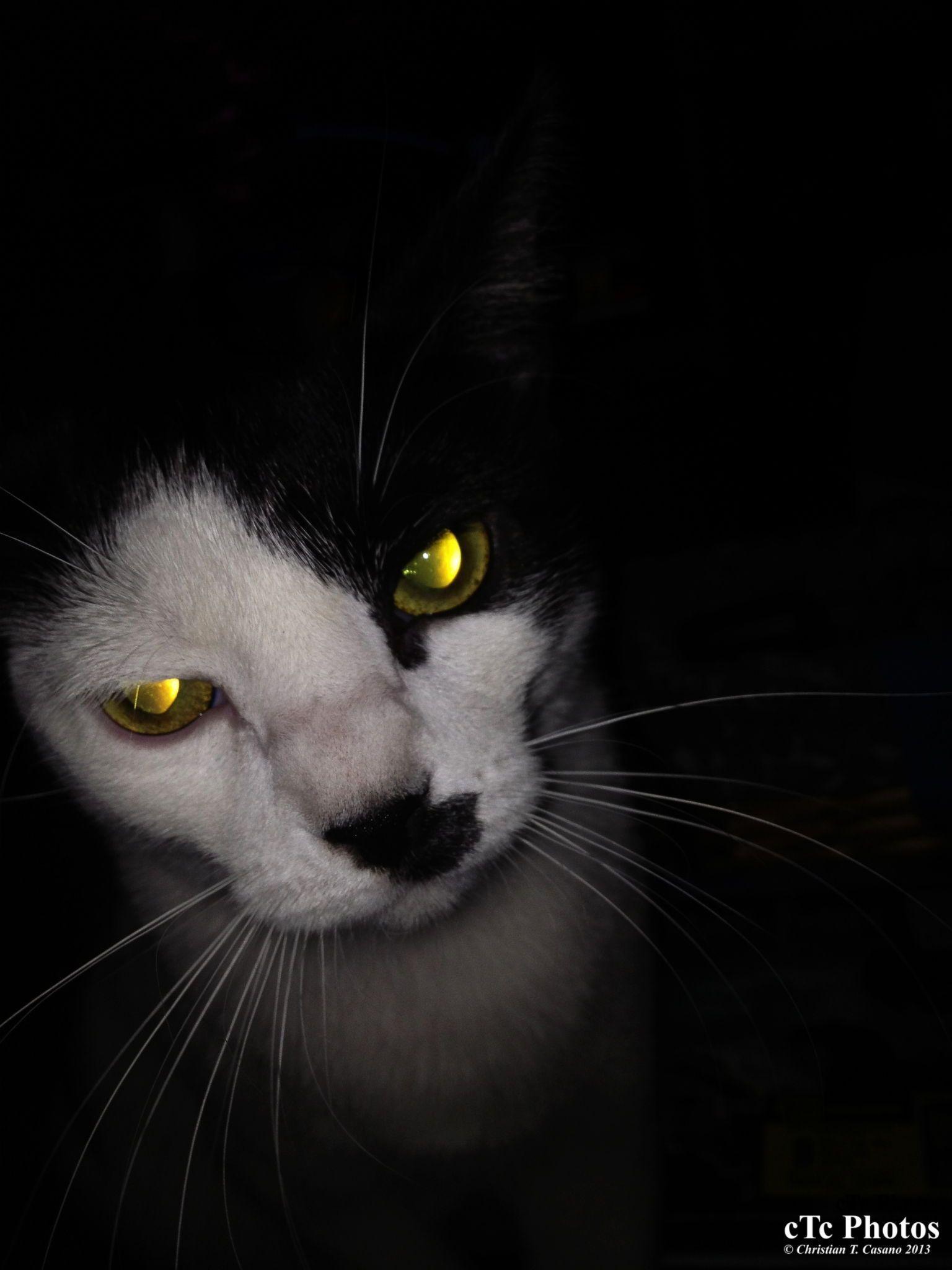 Cat Meowing CatTraining Cat training, Cat behavior