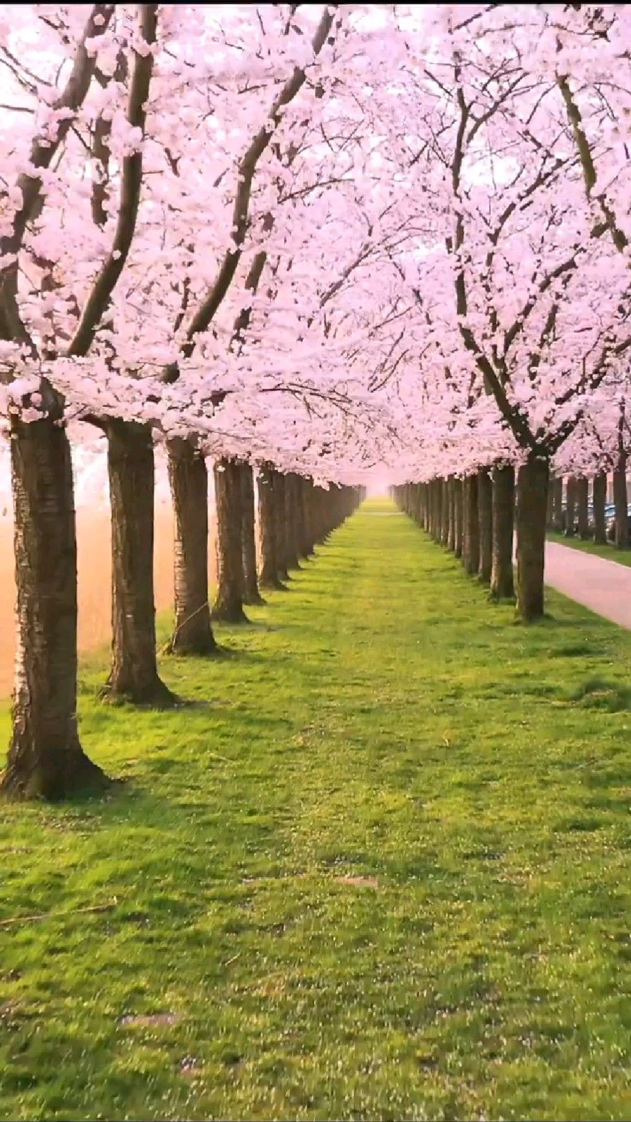 Awesome Spring in Dutchland