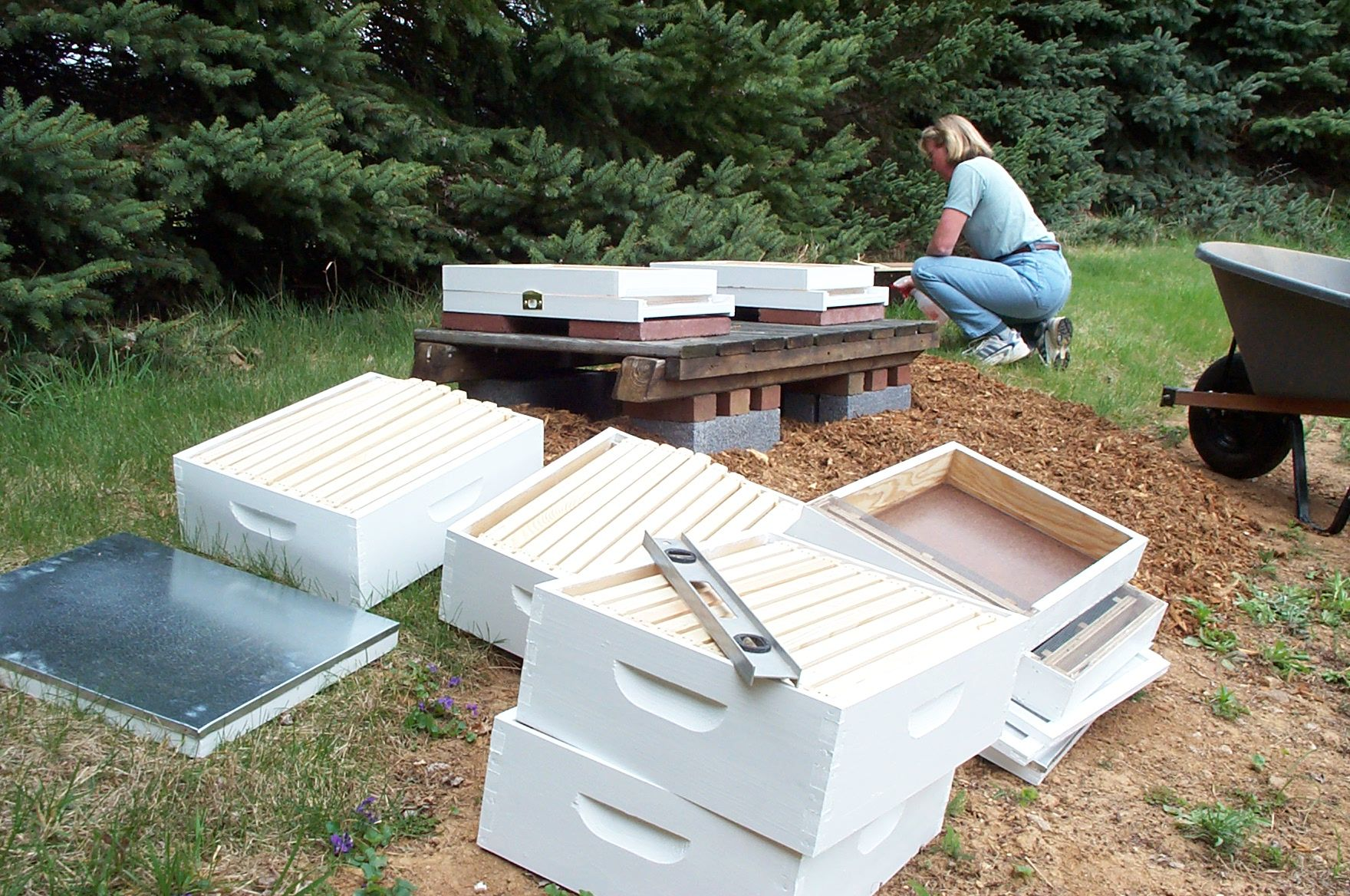 Setting up hives