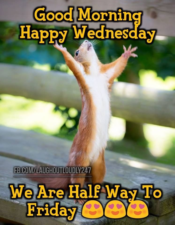 We Are Halfway To Friday Good Morning Happy Wednesday Pictures Photos And Images For Face Happy Wednesday Pictures Good Morning Wednesday Good Morning Happy