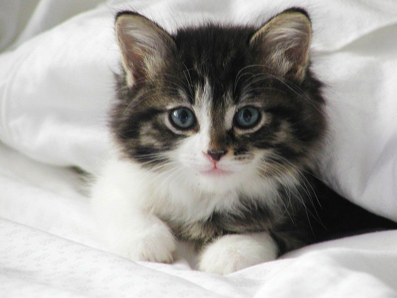 Cats Shows That Our Tamed Domestic Cats Of Today Likely Came