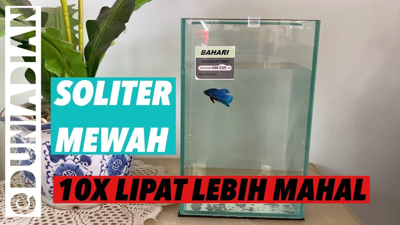 Aquariums Aquarium Soliter Mewah Untuk Ikan Cupang Di 2020 Ikan Cupang Aquarium Ikan Betta