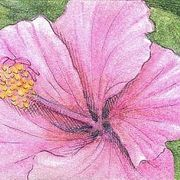 How to Draw Realistic Flower Petals in Watercolor Pencil and Pen