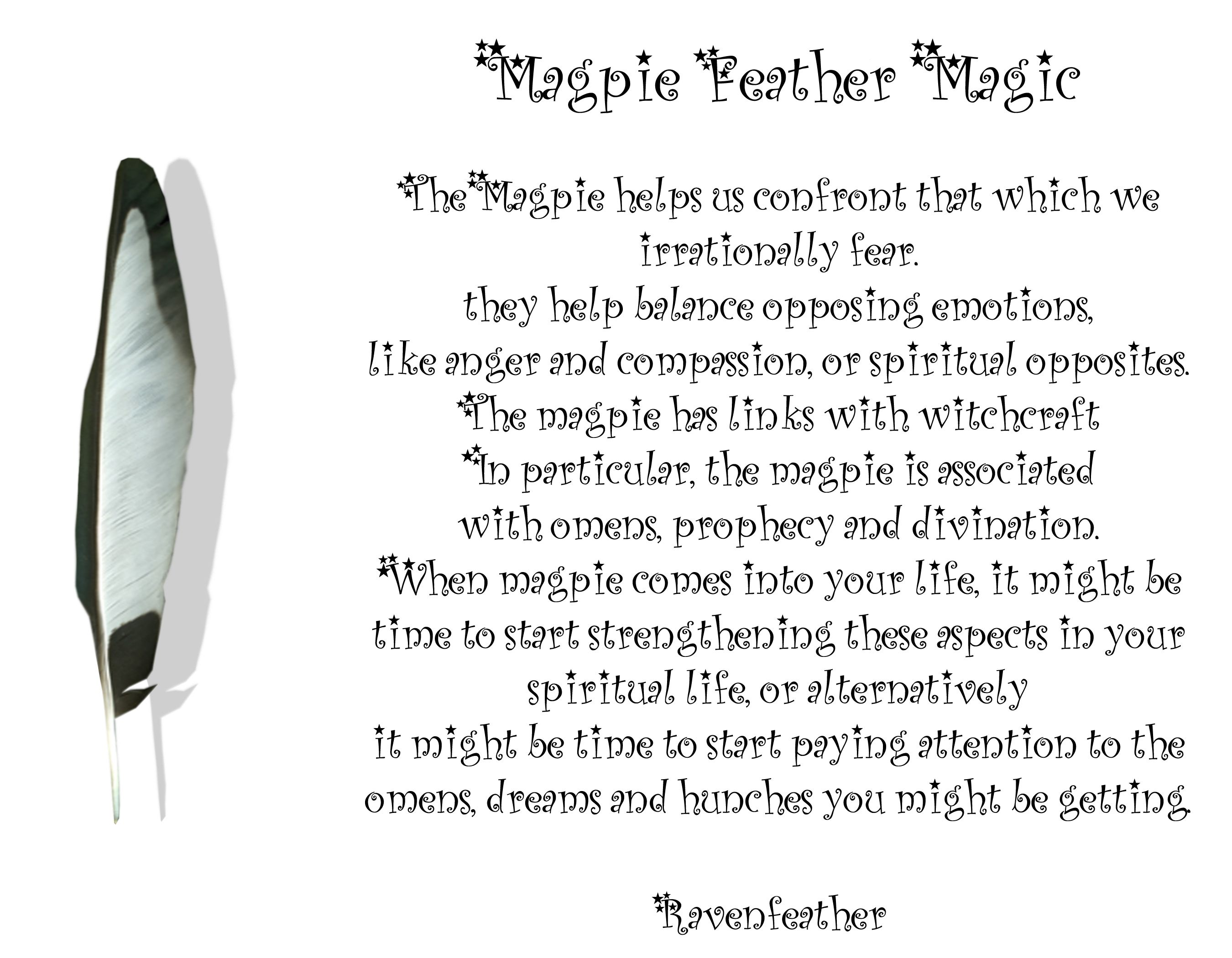 New Version Of Magpie Feather Magic Please Check Your Local And Federal Guidelines For Feather Collection And Poss Feather Magic Feather Meaning Magpie Tattoo