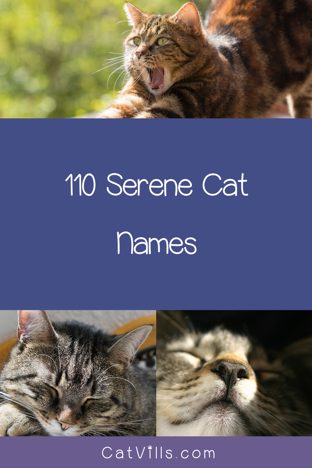 110 Serene Yoga Cat Names for Your Zen Kitty Cat names