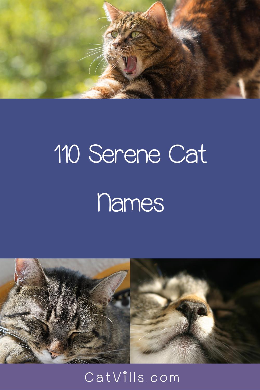 110 Serene Yoga Cat Names For Your Zen Kitty Catvills In 2020 Cat Names Cat Yoga Cute Cat Names