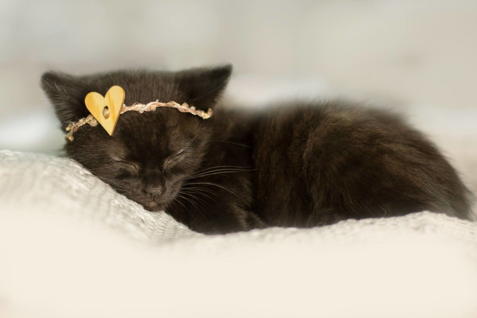 Kitten Gets Her Very Own Photo Shoot Just Like A Real Baby