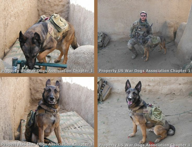 United States War Dogs We Thought We D Share An Excerpt From One