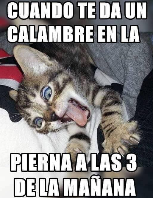 Pin By Luz Angela On Funnies Chistes Chiste De Gatos Meme Gato