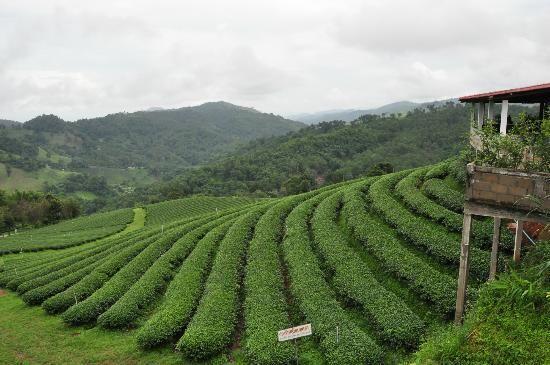 3cc00f53803bde63214b182940200092 - Things To Do In Tea Gardens