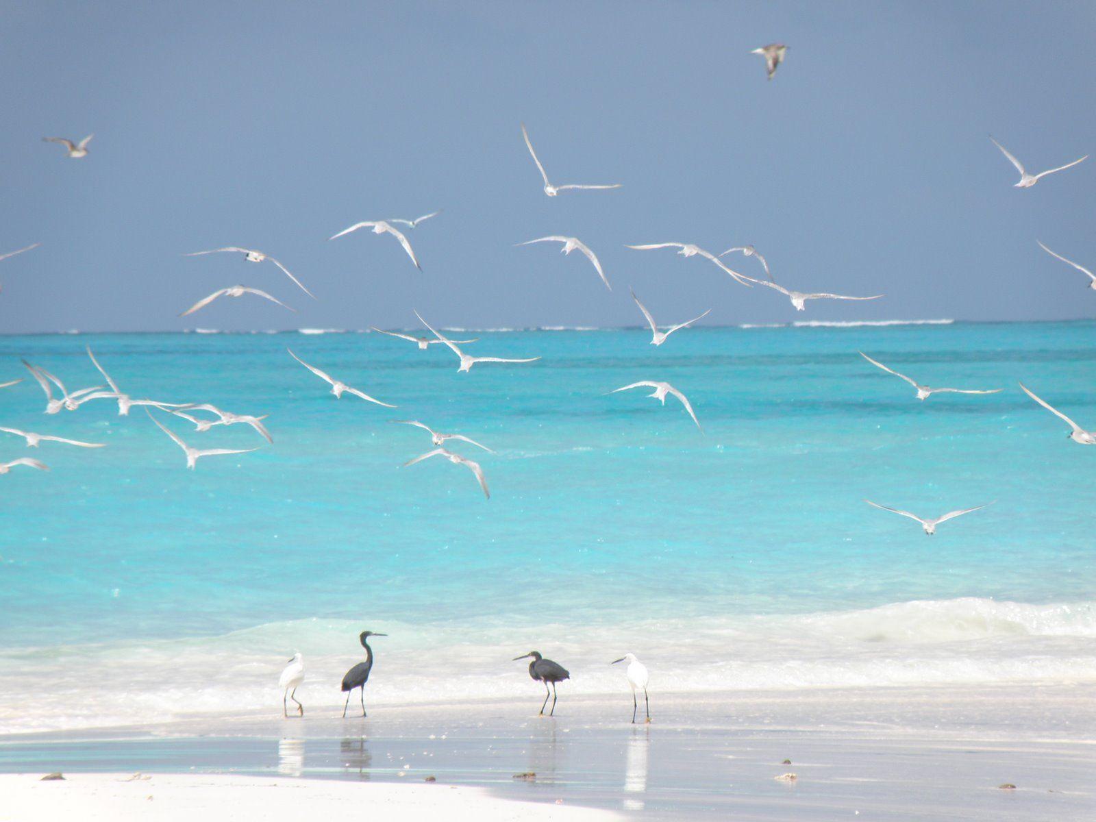 (Tanzania) Sun Sand Surf & SeaGulls!