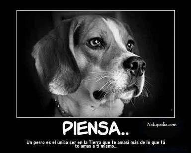 Frases Cortas De Amor Hacia Los Animales 3 Jpg 385 308 Perros